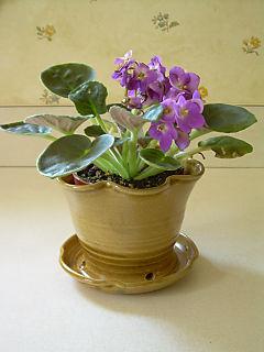 BIA - African violet-1