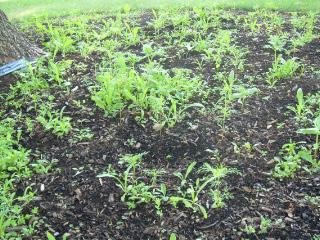 Wildflower Garden 071608-1
