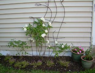 Rose Garden 2008 1-1