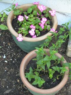 Rose Garden 2008 2-1