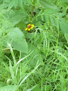 Wildflower Update - 10-1