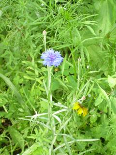Wildflower Update - 2-1