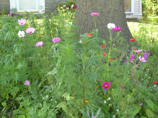 More Wildflower Delights-06