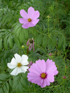 More Wildflower Delights-07