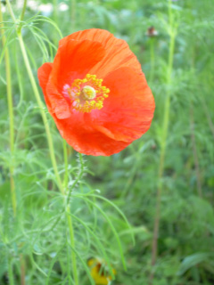 More Wildflower Delights-01