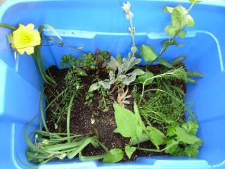 Plant_swap_bounty_11_2