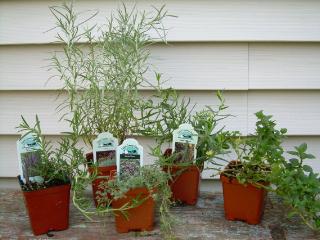 Five_herbs1
