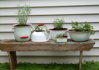 Tinwarepotted_herbs1