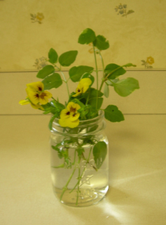 Arrangement_pansies_vinca1