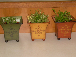 Herbs_in_may_20071