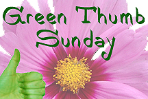 Green_thumb_sunday_logo